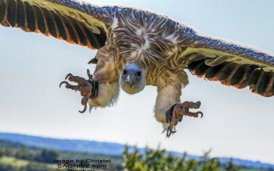The Culture Vulture